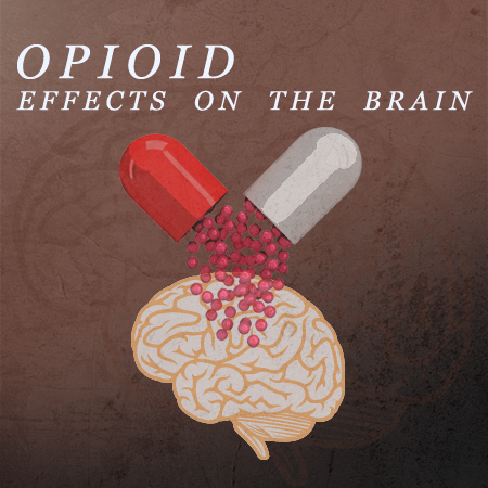 Opioid Effect On Brain Receptors
