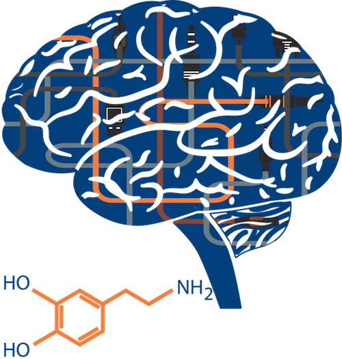 brain rewired opiate addiction